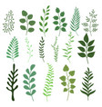 plant branch with green garden leaves set vector image