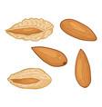 set cartoon almond nuts vector image vector image