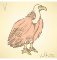 Sketch fancy vulture in vintage style vector image vector image