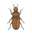 bug brown hand drawn insect vector image vector image