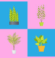 interior decoration plants set vector image