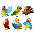 Colourful feathered creatures vector image