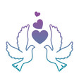doves with heart icon vector image
