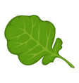 green fresh leaf vector image vector image