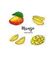 mango fruit drawing hand drawn mango vector image vector image