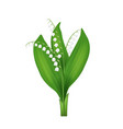 realistic detailed 3d lilly of the valley vector image