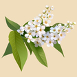 White cherries flowers with leaves vector image vector image