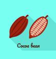 cocoa bean icon flat style vector image