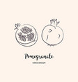 pomegranate fruit drawing hand drawn garnet vector image vector image