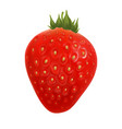 strawberry agriculture farm delicious berry vector image vector image