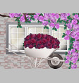 beautiful roses provence style background vector image