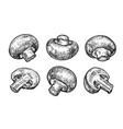champignons mushrooms set hand drawn sketch vector image