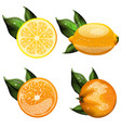 collection of fruits on white background vector image vector image