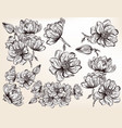 collection of hand drawn magnolia flowers vector image vector image