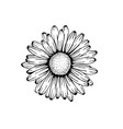 beautiful monochrome black and white daisy flower vector image vector image