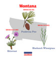 montana set usa official state symbols vector image