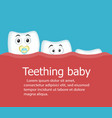 teething baby banner with teeth vector image vector image