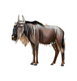 wildebeest from a splash watercolor colored vector image vector image