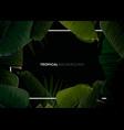 dark tropical summer design with banana palm vector image
