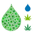 drop composition of marijuana vector image