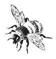 engraving flying bee isolated on white background vector image vector image