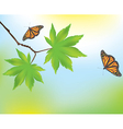 maple leaves and butterflies vector image vector image
