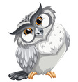 tn owl201 vector image vector image