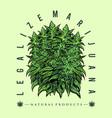 legalize forest marijuana leaf badge vector image