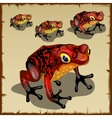Red spotted toad with big eyes vector image