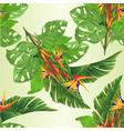 seamless texture strelitzia reginae vector image vector image