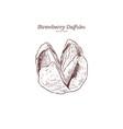 strawberry daifuku hand draw sketch vector image vector image