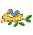 bird in nest on white background vector image vector image