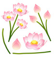 nelumbo nucifera - indian lotus sacred lotus vector image vector image
