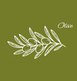 white hand drawn olive branch on green backround vector image