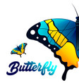 yellow black blue butterfly white background vector image