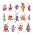 colorful beetles collection vector image