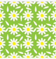 blooming chamomile with petals on green vector image
