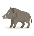 cute forest animal gray boar icon isolated on vector image vector image
