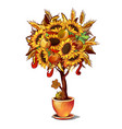 ornamental tree a symbol thanksgiving day vector image