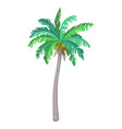 coconut palm tree vector image vector image