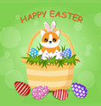 cute corgi dog with bunny ears is sitting vector image
