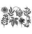 hand sketched autumn plants collection elegant vector image