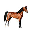 horse from splash watercolors hand drawn vector image vector image
