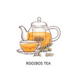 rooibos tea drawing - glass teapot and teacup vector image