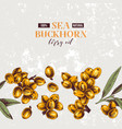 background with seamless sea buckthorn border vector image vector image