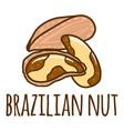 brazilian nut icon hand drawn style vector image vector image