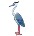 heron isolated on white background vector image vector image