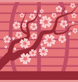 sakura japan cherry branch tree with vector image vector image