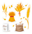 cereals - wheat vector image