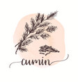 cumin sketch on watercolor paint hand drawn ink vector image vector image